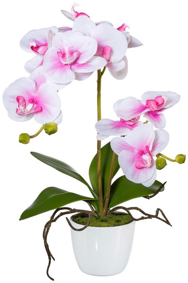kunstpflanze orchidee phalaenopsis im keramiktopf h he 60 cm rosa online kaufen otto. Black Bedroom Furniture Sets. Home Design Ideas