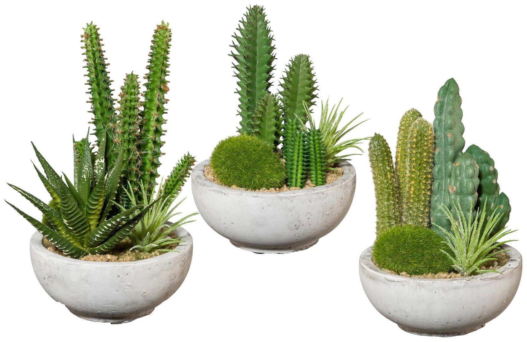 Kunstpflanze »Kakteen-Arrangement«, 3 Stk. im Zementtopf, Höhe 16 cm
