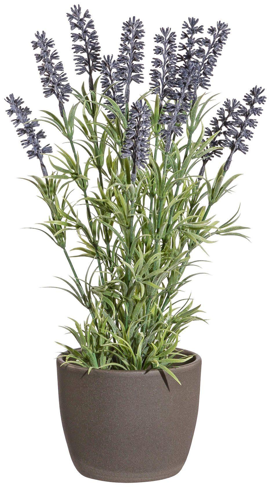 Kunstpflanze »Lavendel«, im Keramiktopf, Höhe 37 cm, lila