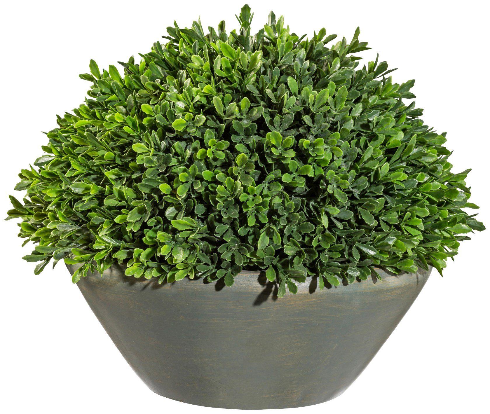 Kunstpflanze »Buchsbaum Halbkugel«, im Zementtopf, Höhe 38 cm