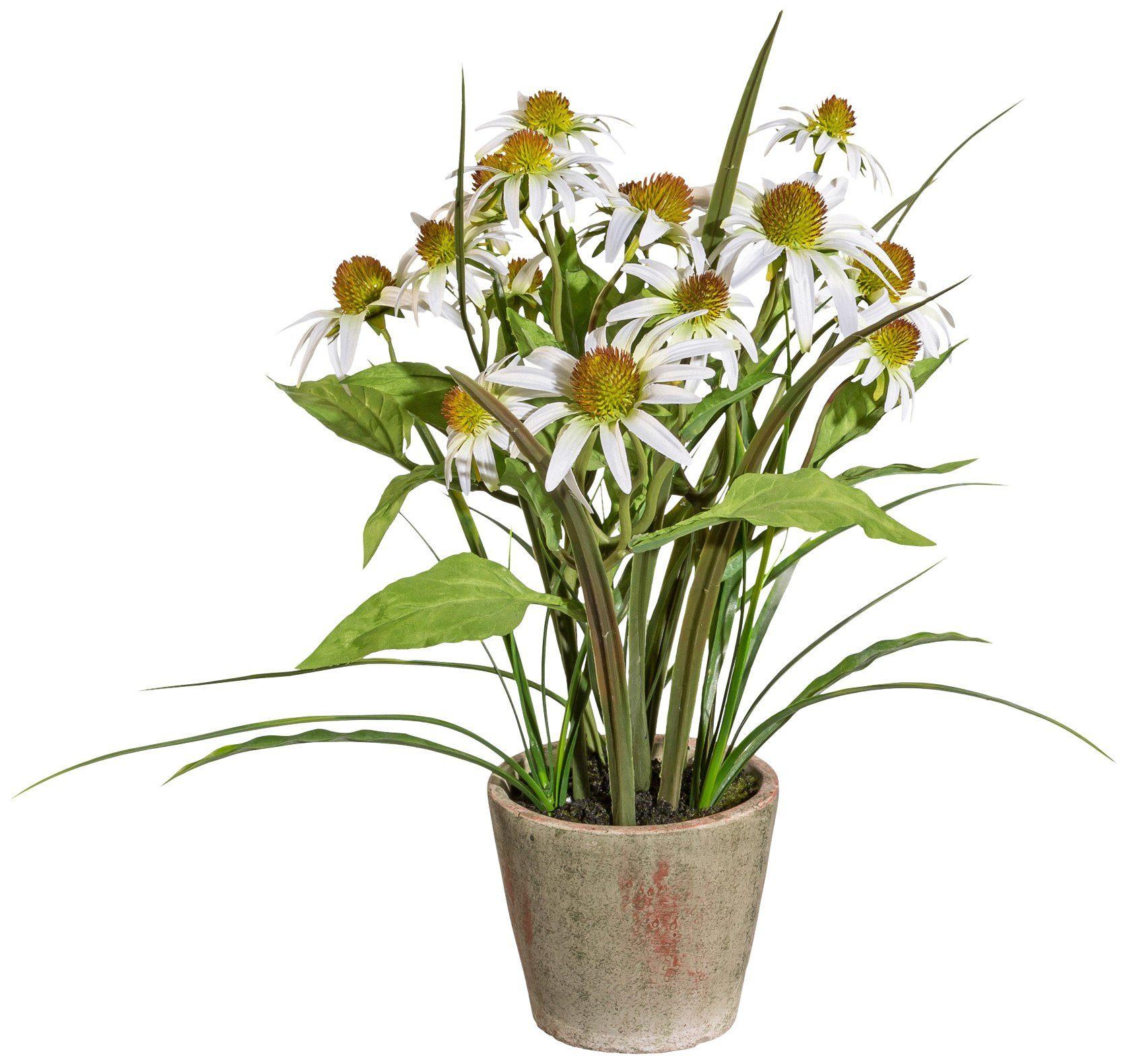 Kunstpflanze »Rudbeckia«, im Zementtopf, Höhe 40 cm, weiß