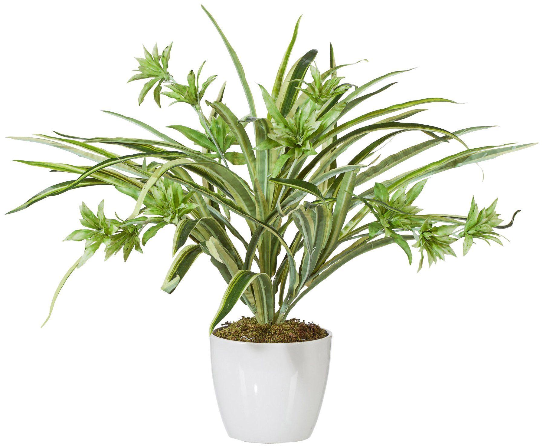 Kunstpflanze »Grünlilie Chlorophythum«, im Keramiktopf, Höhe 40 cm