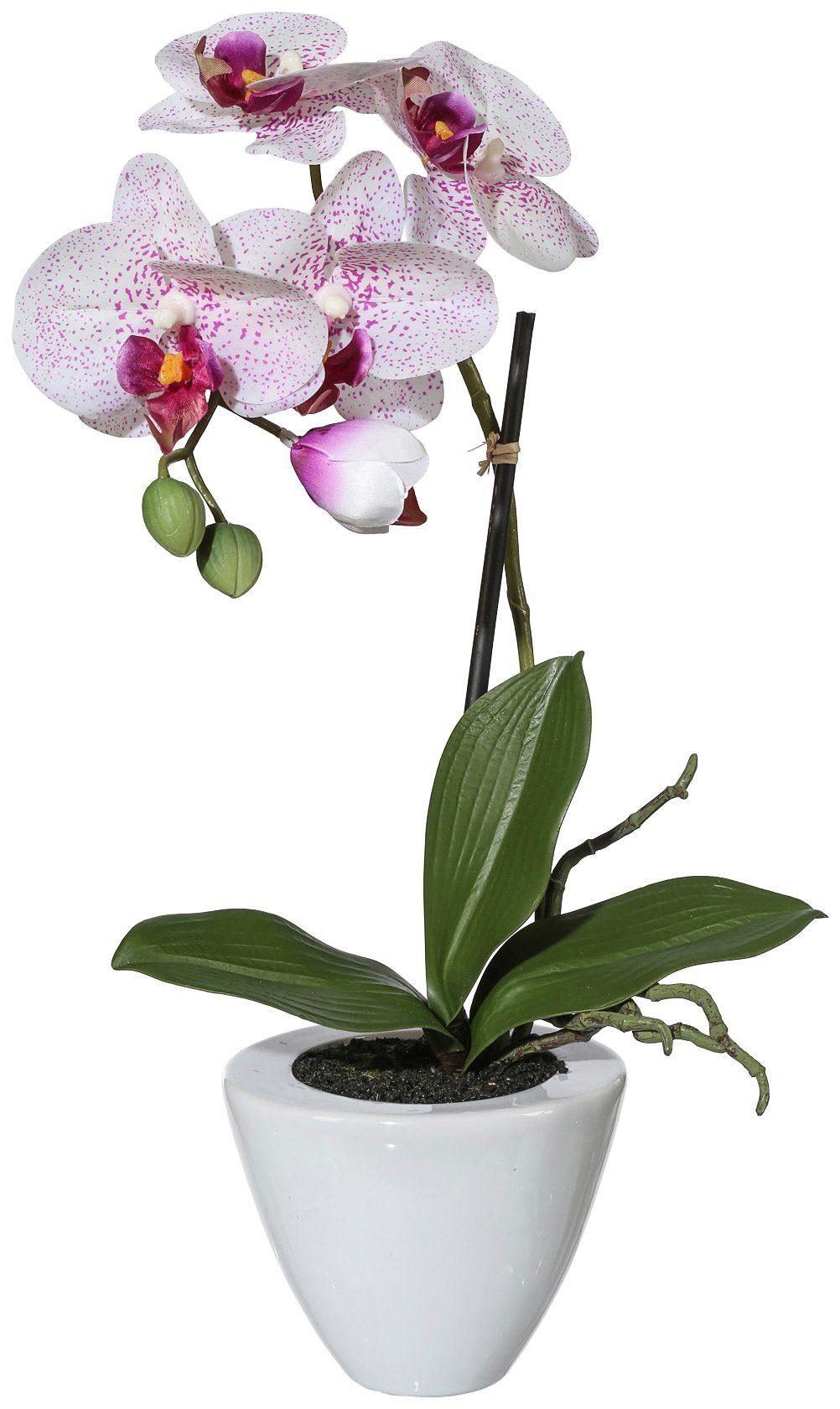 Kunstpflanze »Orchidee Phalaenopsis«, im Keramiktopf, Höhe 36 cm, weiß/lila
