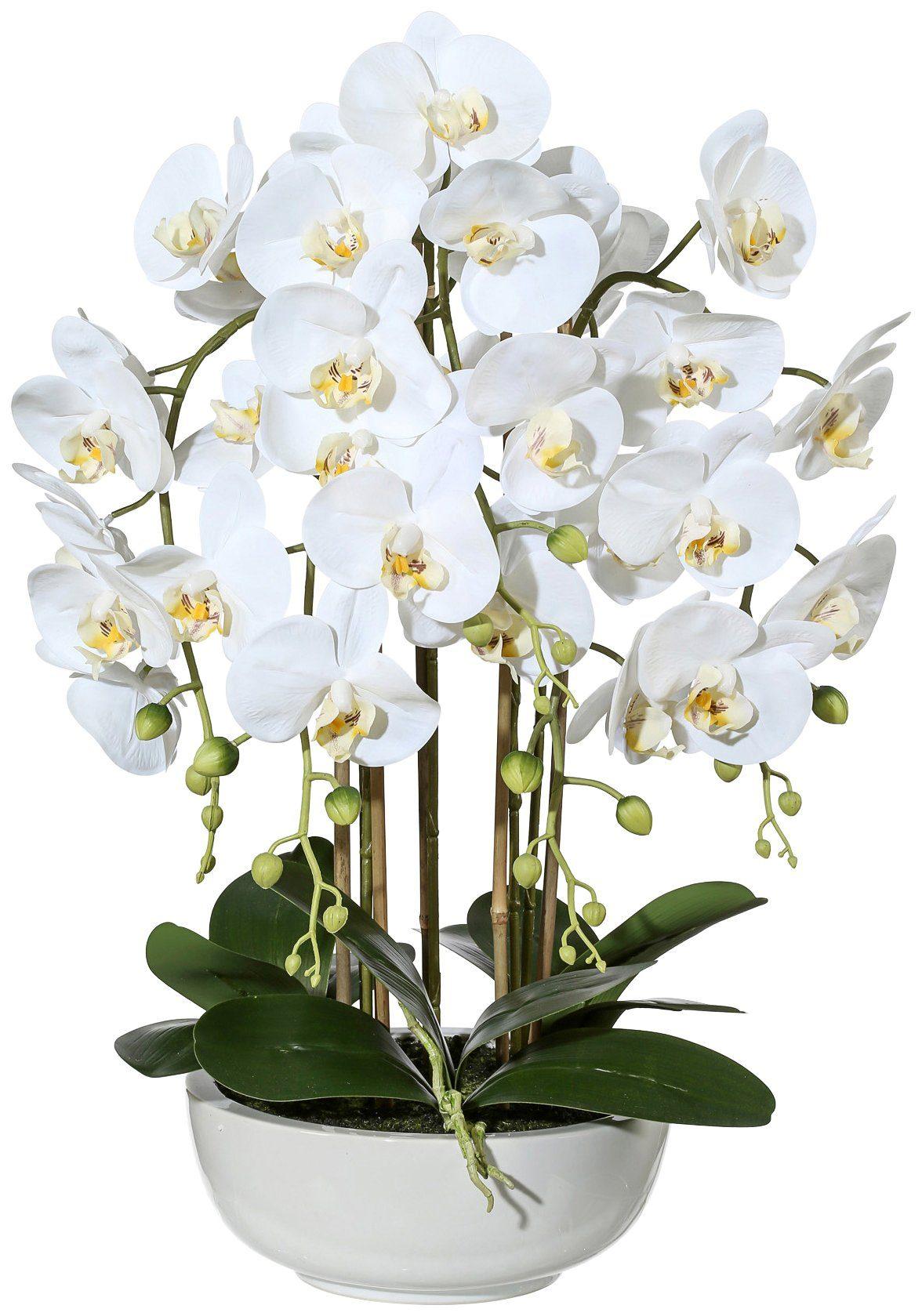 Kunstpflanze »Orchidee Phalaenopsis«, in Keramikschale, Höhe 66 cm, weiß