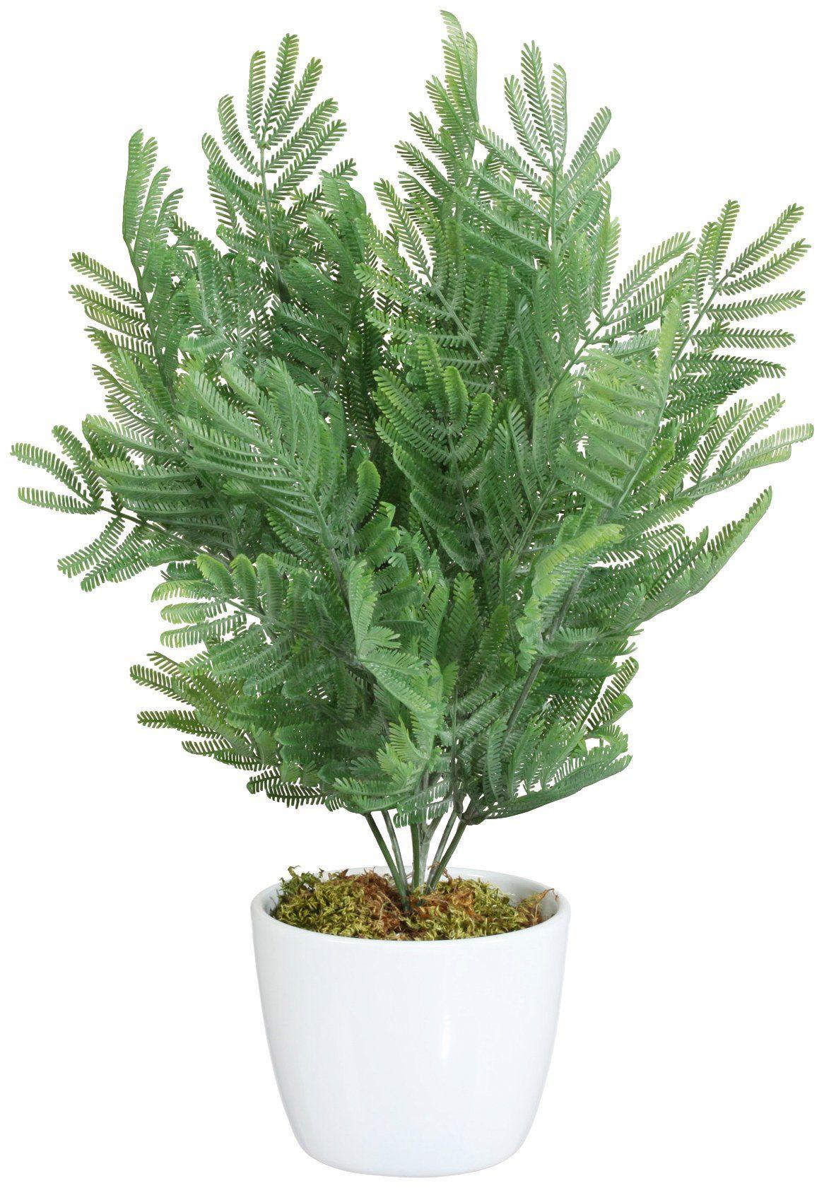 Kunstpflanze »Farn«, im Keramiktopf, Höhe 40 cm