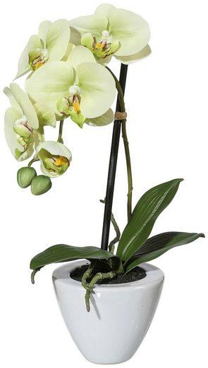 Kunstpflanze »Orchidee Phalaenopsis«, im Keramiktopf, Höhe 36 cm, grün