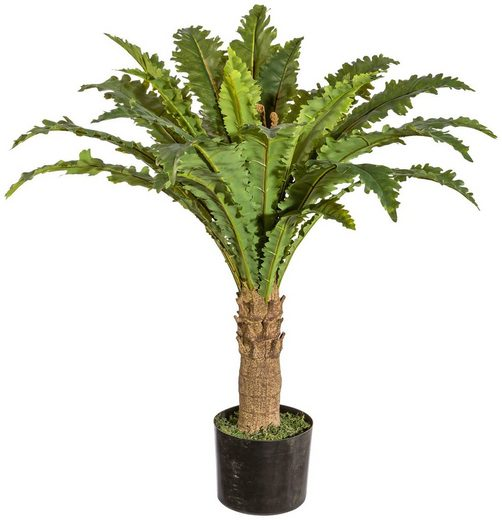 Kunstpflanze »Aspleniumfarn«, im Kunststofftopf, H: 70 cm