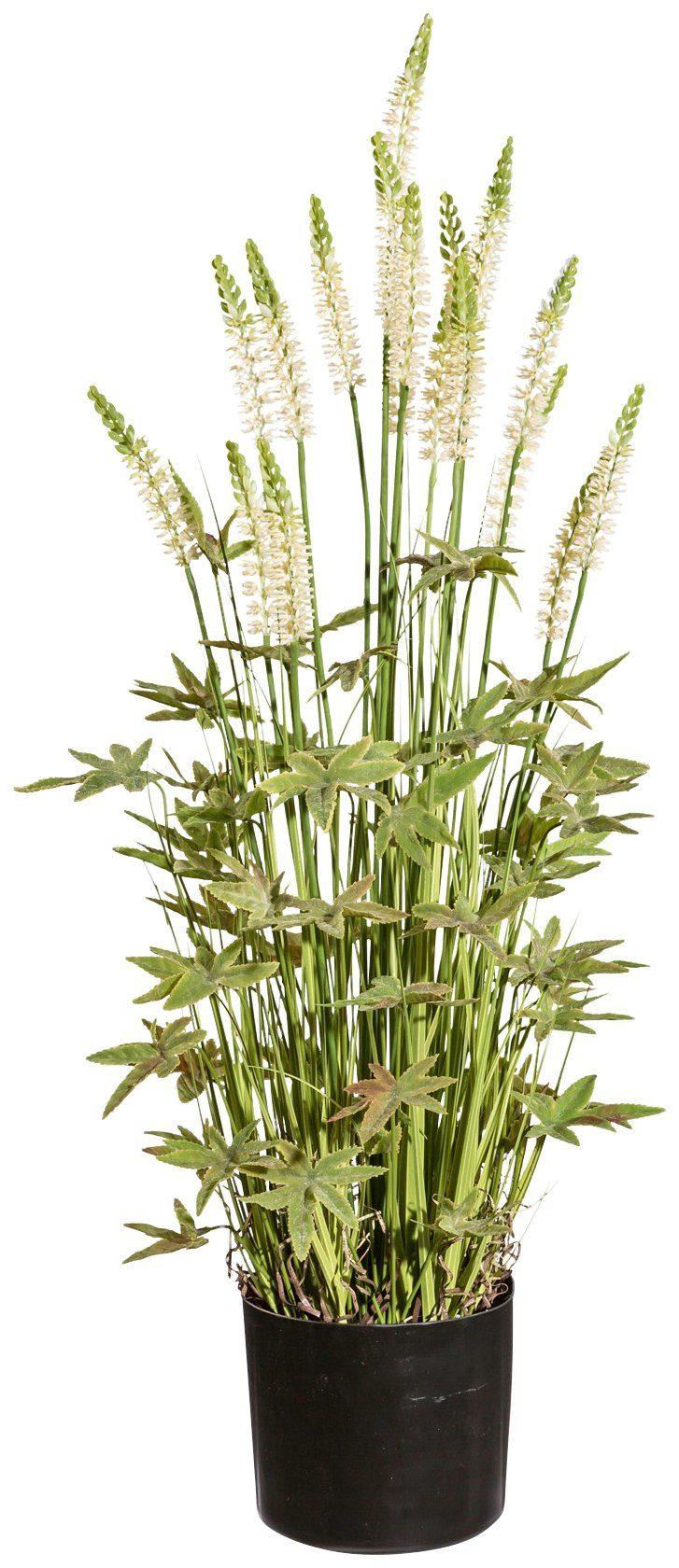 Kunstpflanze »Duftnesselbusch«, im Kunststofftopf, H: 75 cm, creme