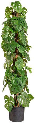 Kunstpflanze »Split-Philodendron«, im Kunststofftopf, H: 90 cm