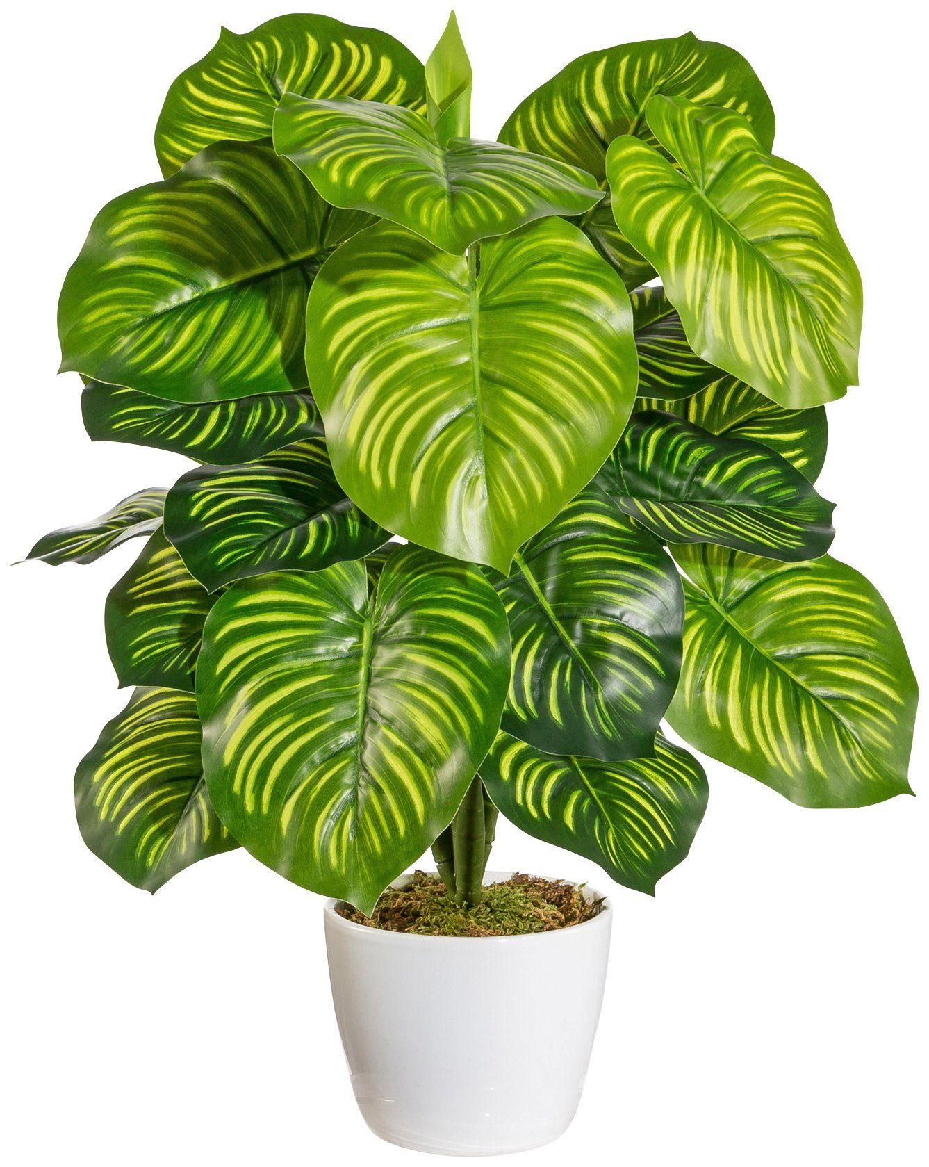 Kunstpflanze »Marantabusch«, im Keramiktopf mit Moos, Höhe 50 cm