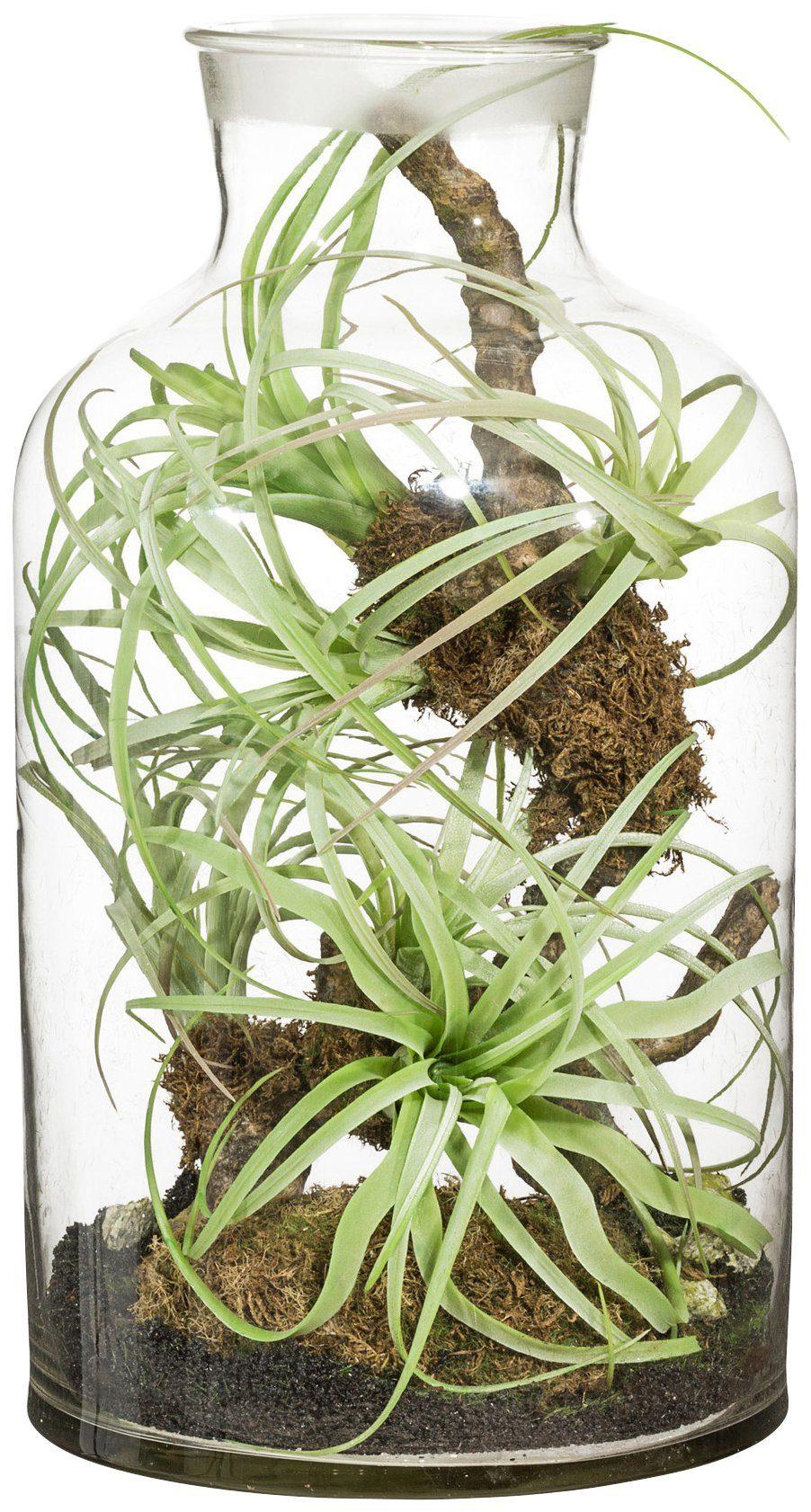 Kunstpflanze »Tillandsien-Arrangement«, im Glas, Höhe 43 cm