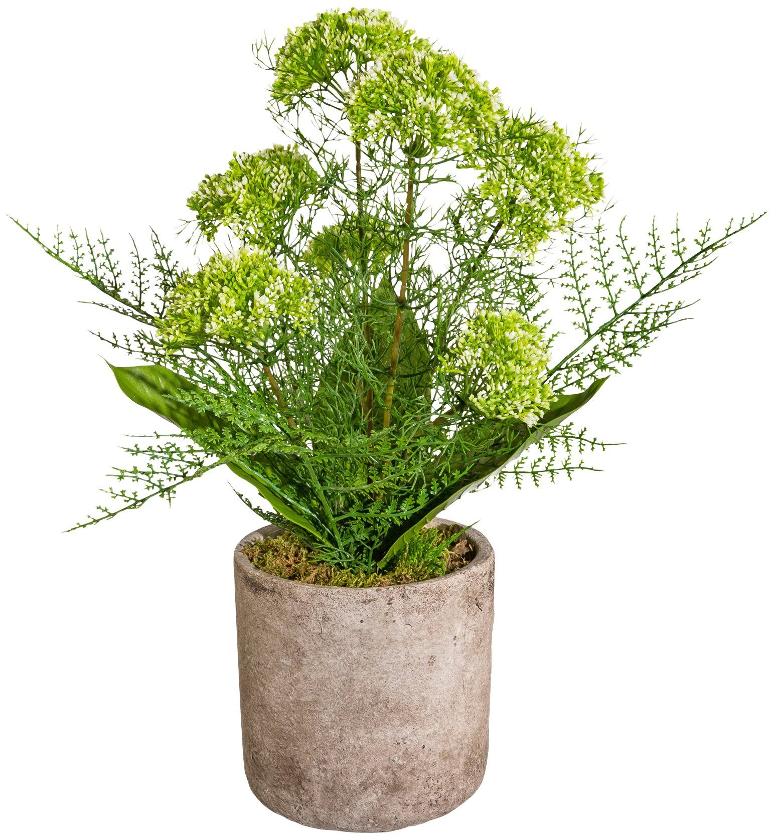 Kunstpflanze »Alliumbusch«, im Keramiktopf, Höhe 55 cm, grün
