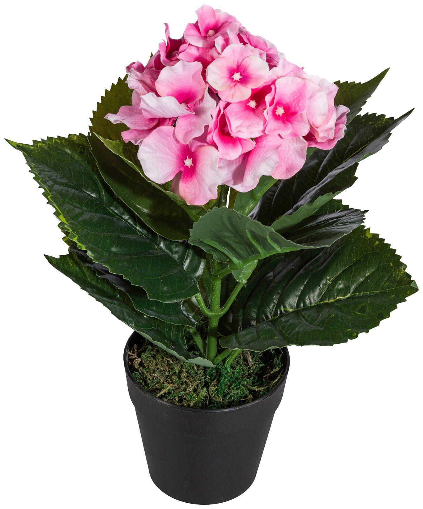 Kunstpflanze »Hortensie«, im Kunststofftopf, H: 30 cm, rosa