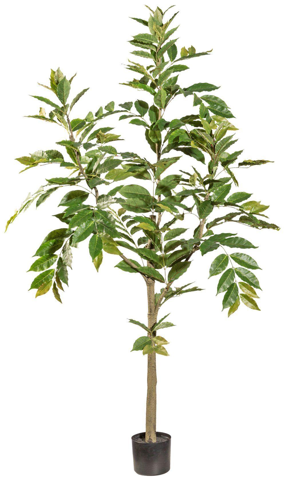 Kunstpflanze »Himmelsbambus«, im Kunststofftopf, H: 180 cm