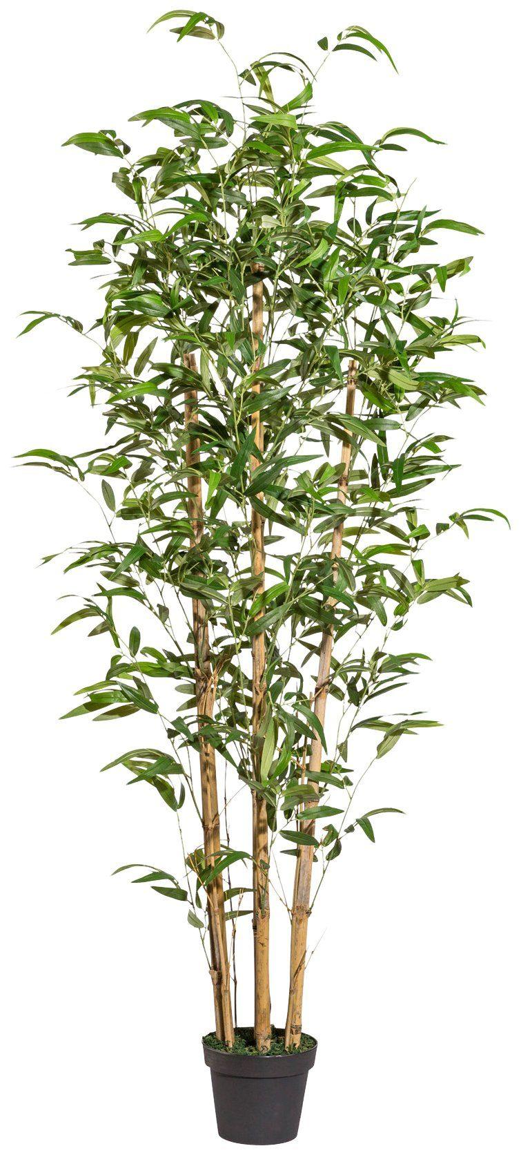 Kunstpflanze »Bambus«, im Kunststofftopf, H: 185 cm