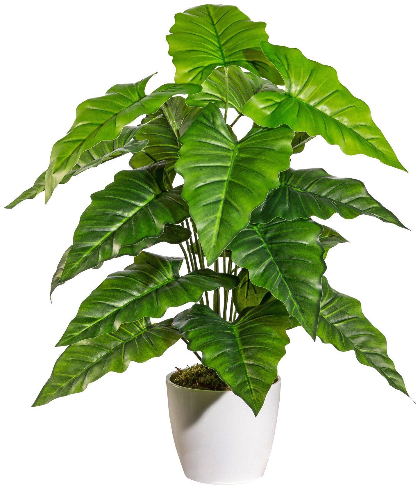 Kunstpflanze »Anthurium«, im Keramiktopf mit Moos, Höhe 60 cm