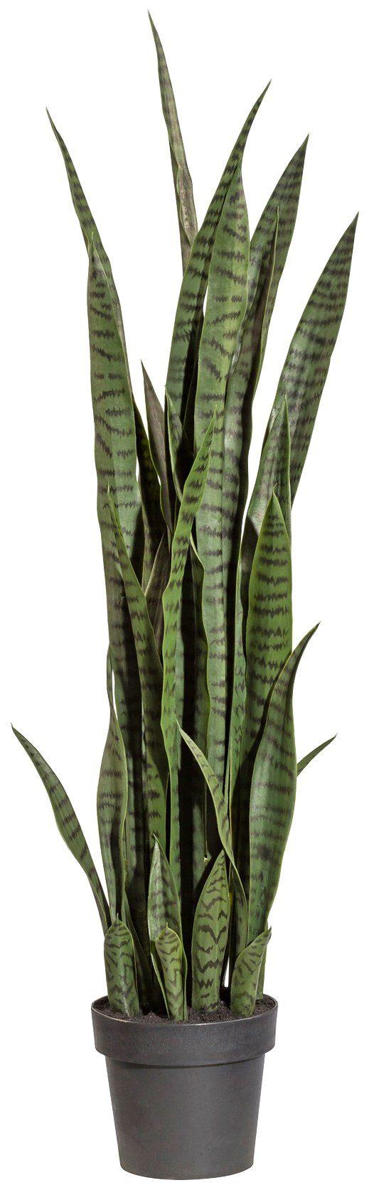 Kunstpflanze »Sanseveria«, im Kunststofftopf, H: 120 cm