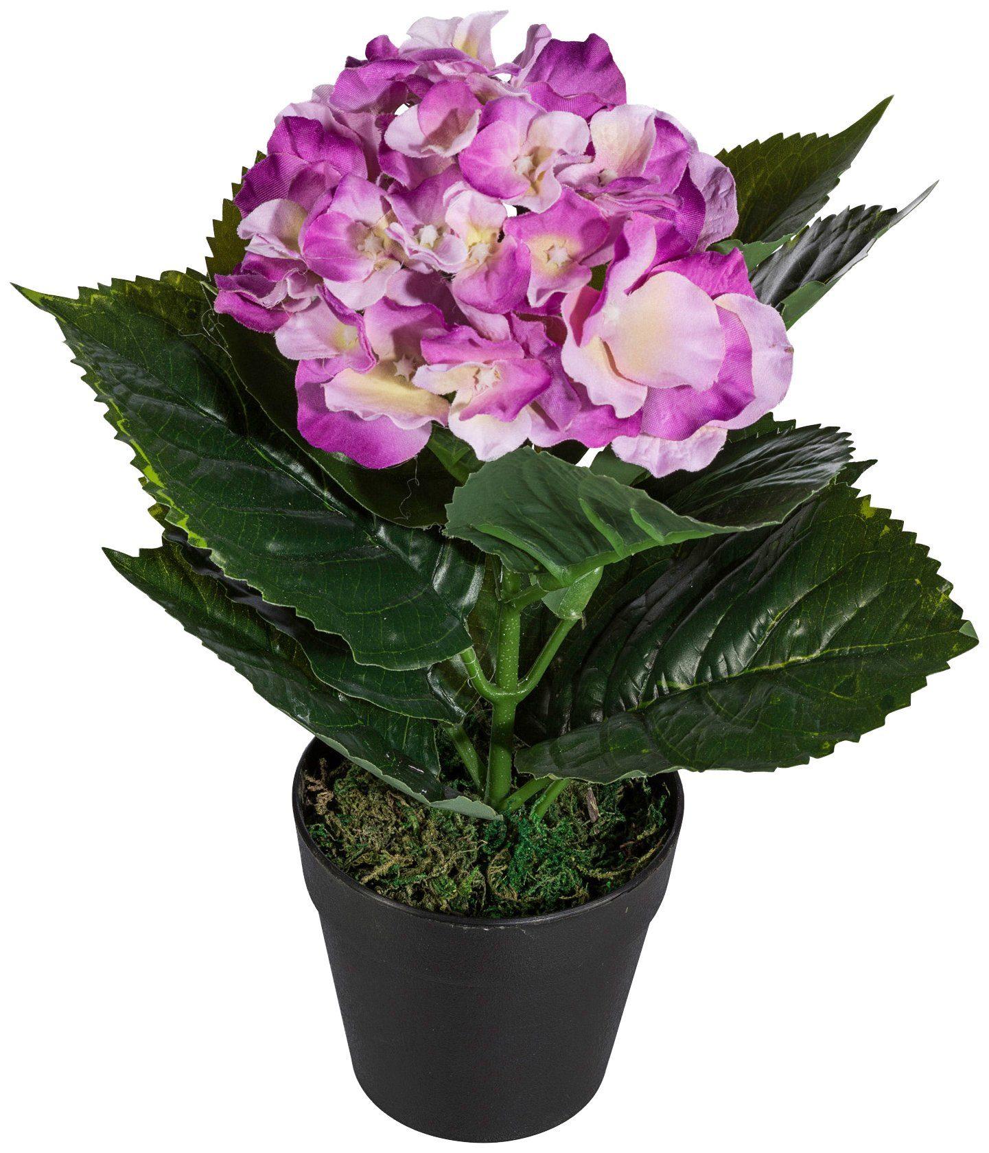 Kunstpflanze »Hortensie«, im Kunststofftopf, H: 30 cm, pink