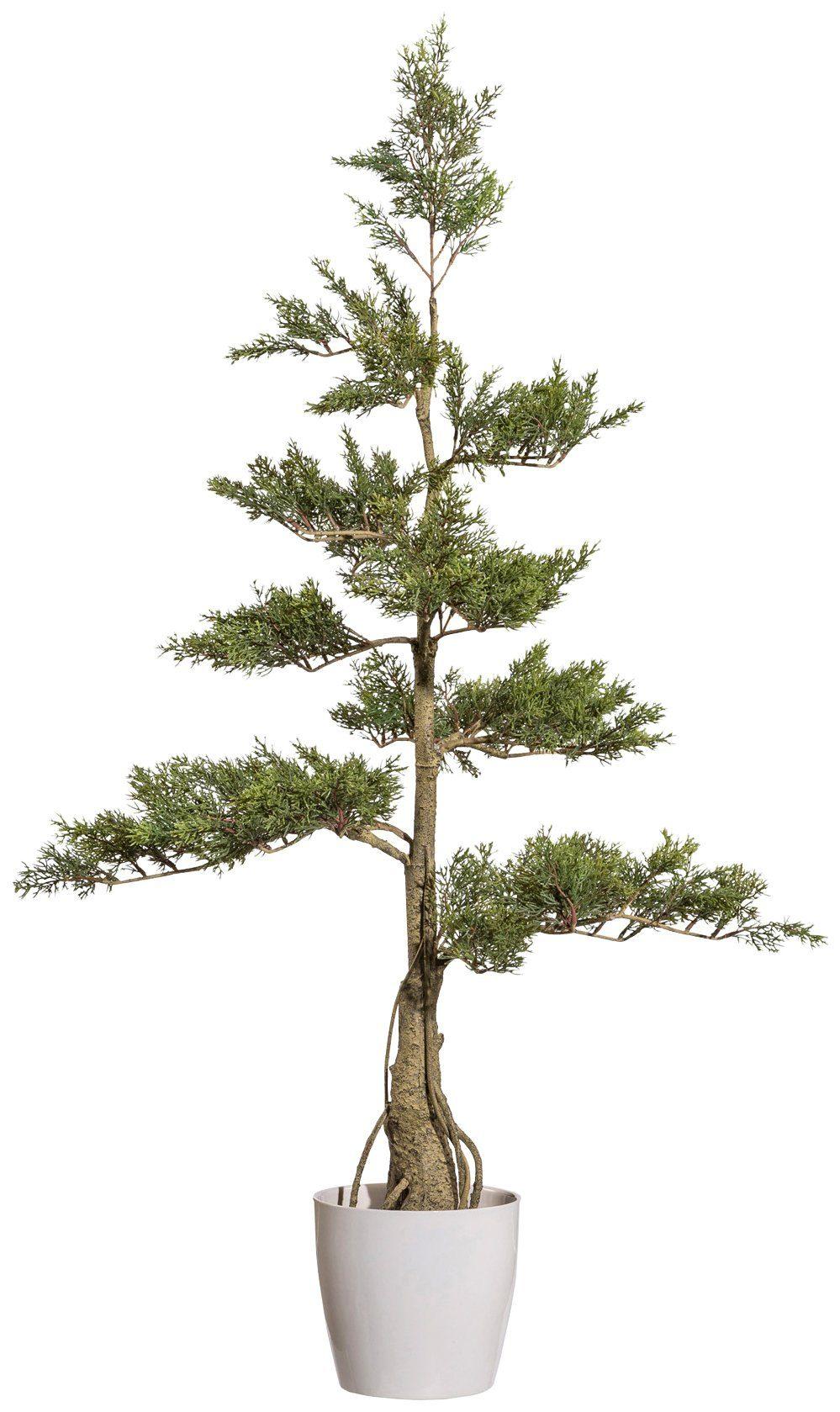 Kunstpflanze »Zedernbaum«, im Keramiktopf, Höhe 160 cm