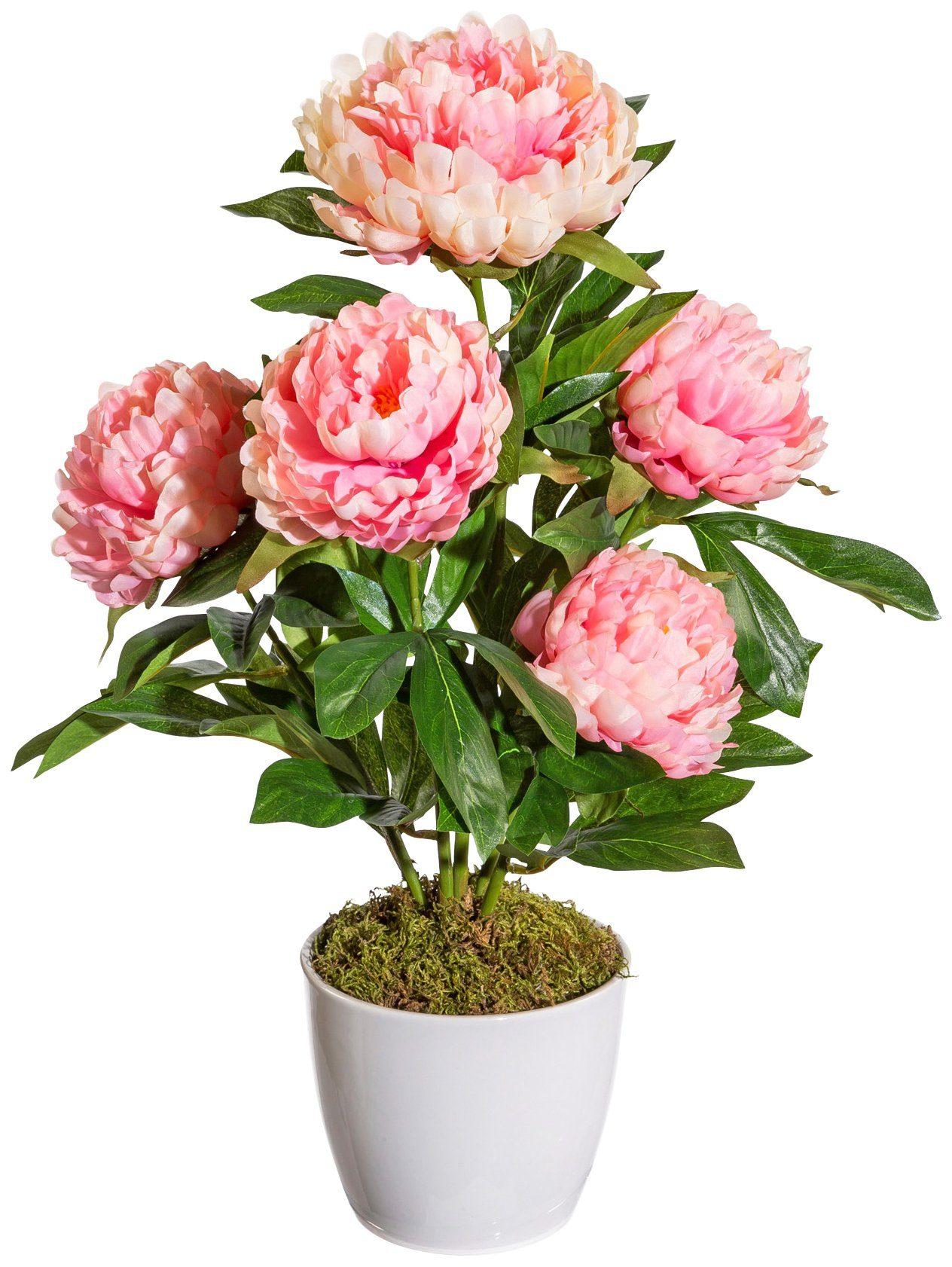 Kunstpflanze »Peonie«, im Keramiktopf, Höhe 45 cm, rosa