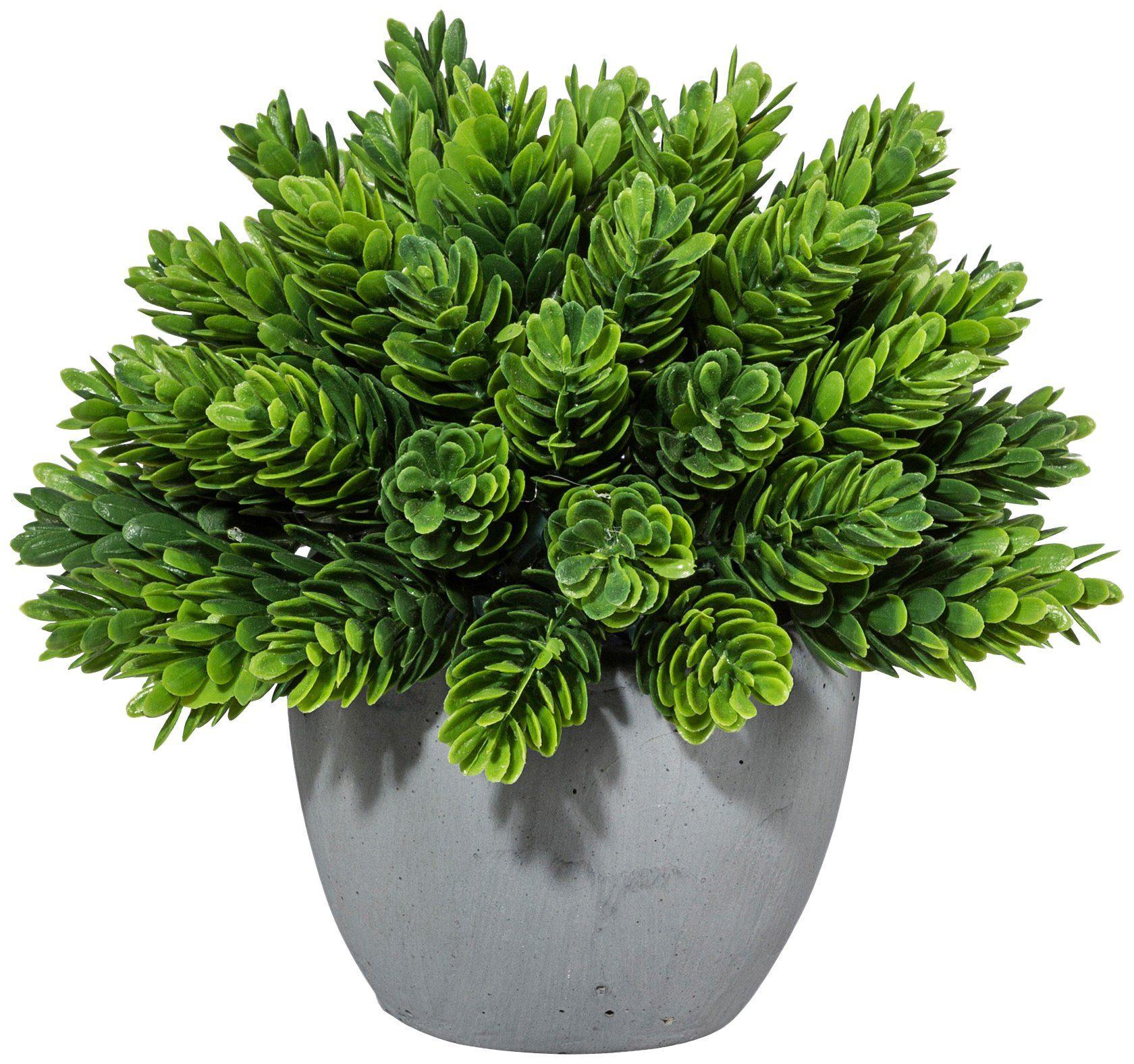 Kunstpflanze »Kugel aus Maitaizweigen«, im Zementtopf, Höhe 15 cm