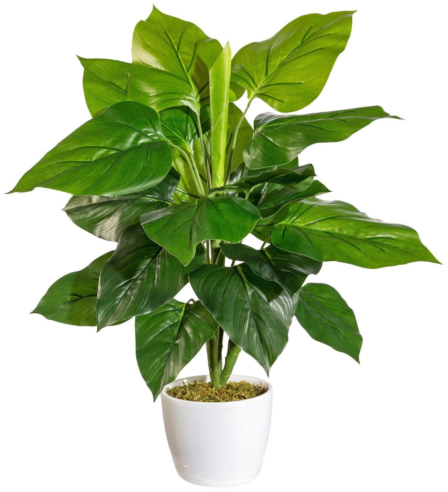 Kunstpflanze »Philodendronbusch«, im Keramiktopf mit Moos, Höhe 50 cm