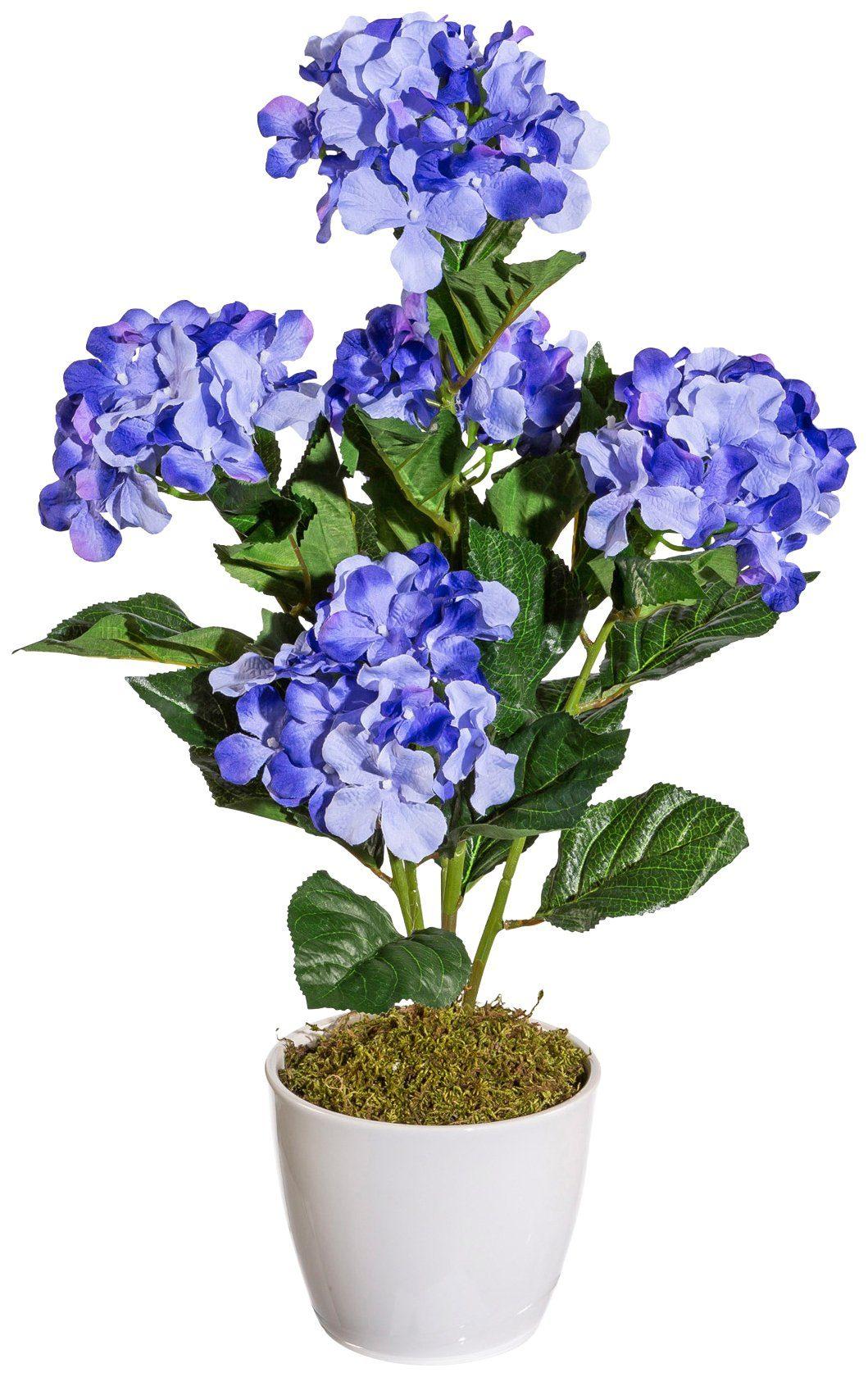 Kunstpflanze »Hortensie«, im Keramiktopf, Höhe 50 cm, blau