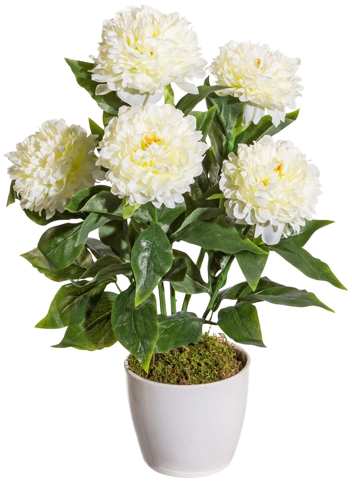Kunstpflanze »Peonie«, im Keramiktopf, Höhe 50 cm, weiß