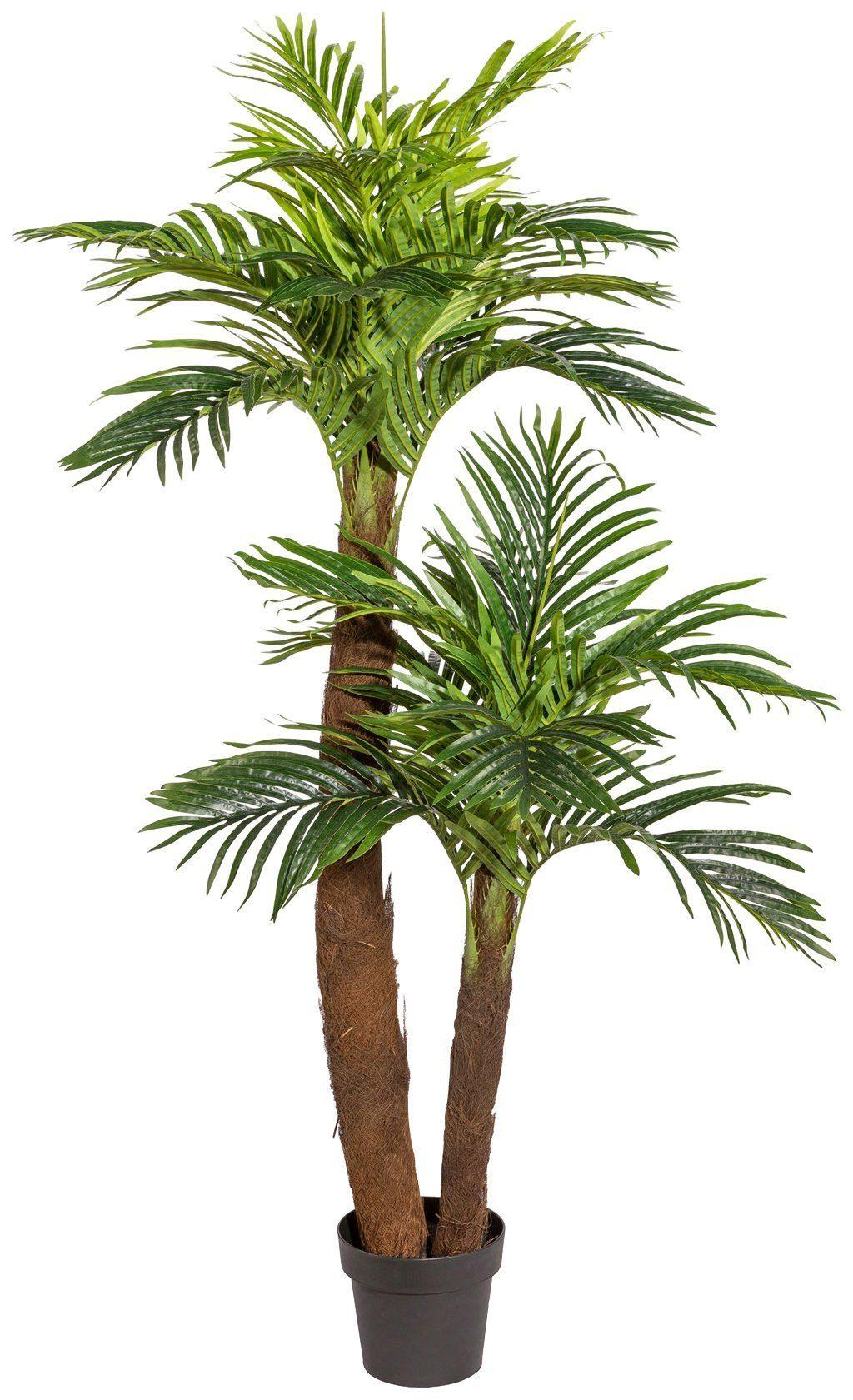 Kunstpflanze »Kentiapalme«, im Kunststofftopf, H: 150 cm