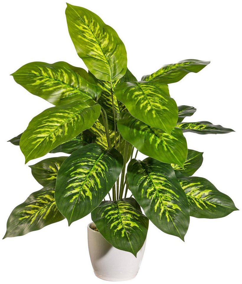 kunstpflanze dieffenbachia im keramiktopf mit moos h he 60 cm online kaufen otto. Black Bedroom Furniture Sets. Home Design Ideas