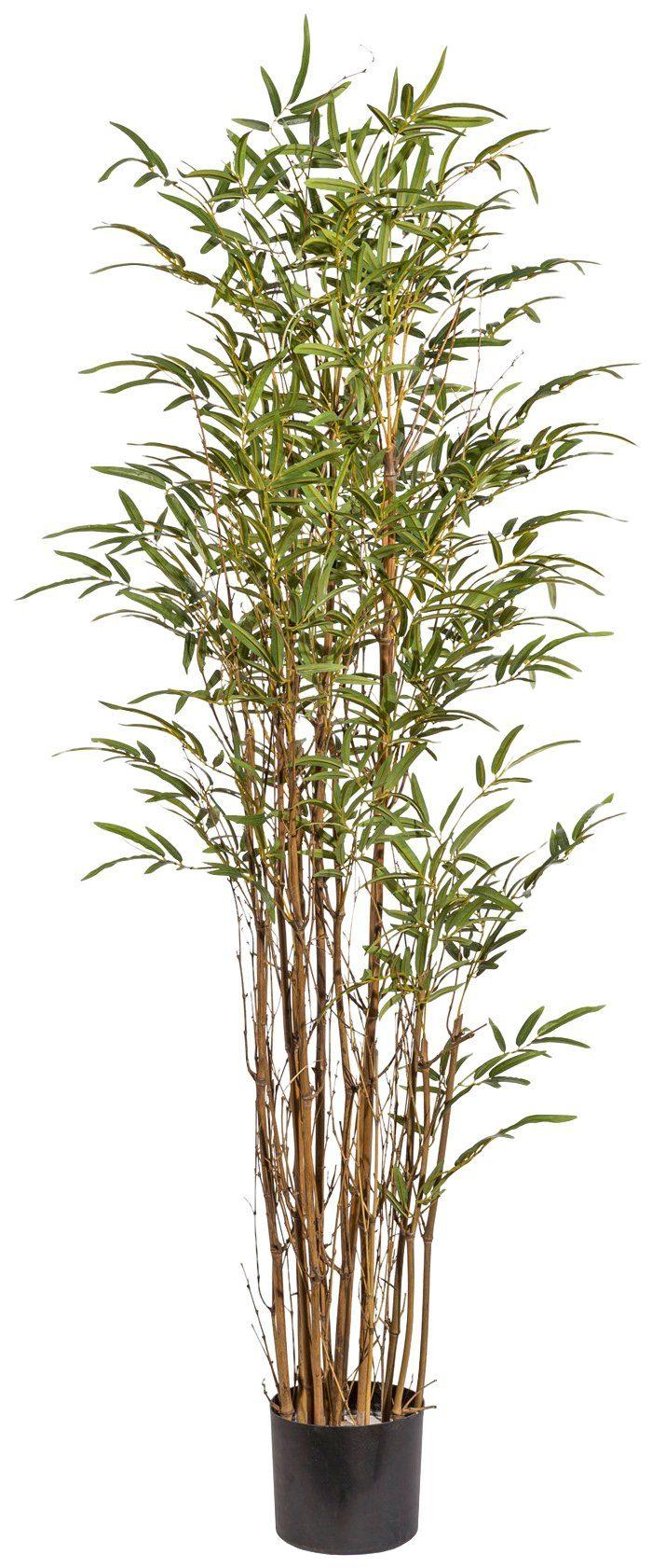 Kunstpflanze »Bambus«, im Kunststofftopf, H: 155 cm