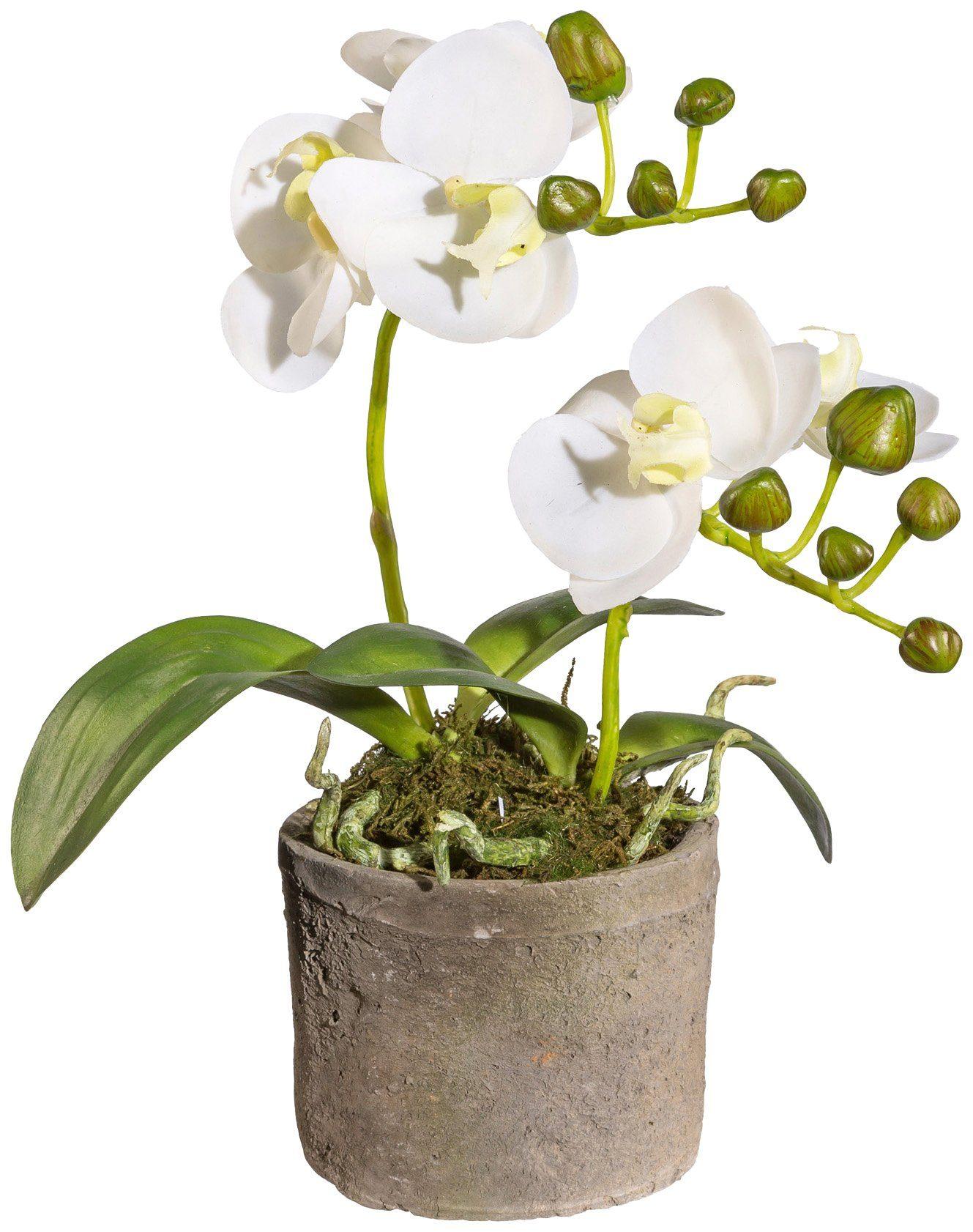 Kunstpflanze »Orchidee Phalaenopsis«, im Zementtopf, Höhe 26 cm, weiß