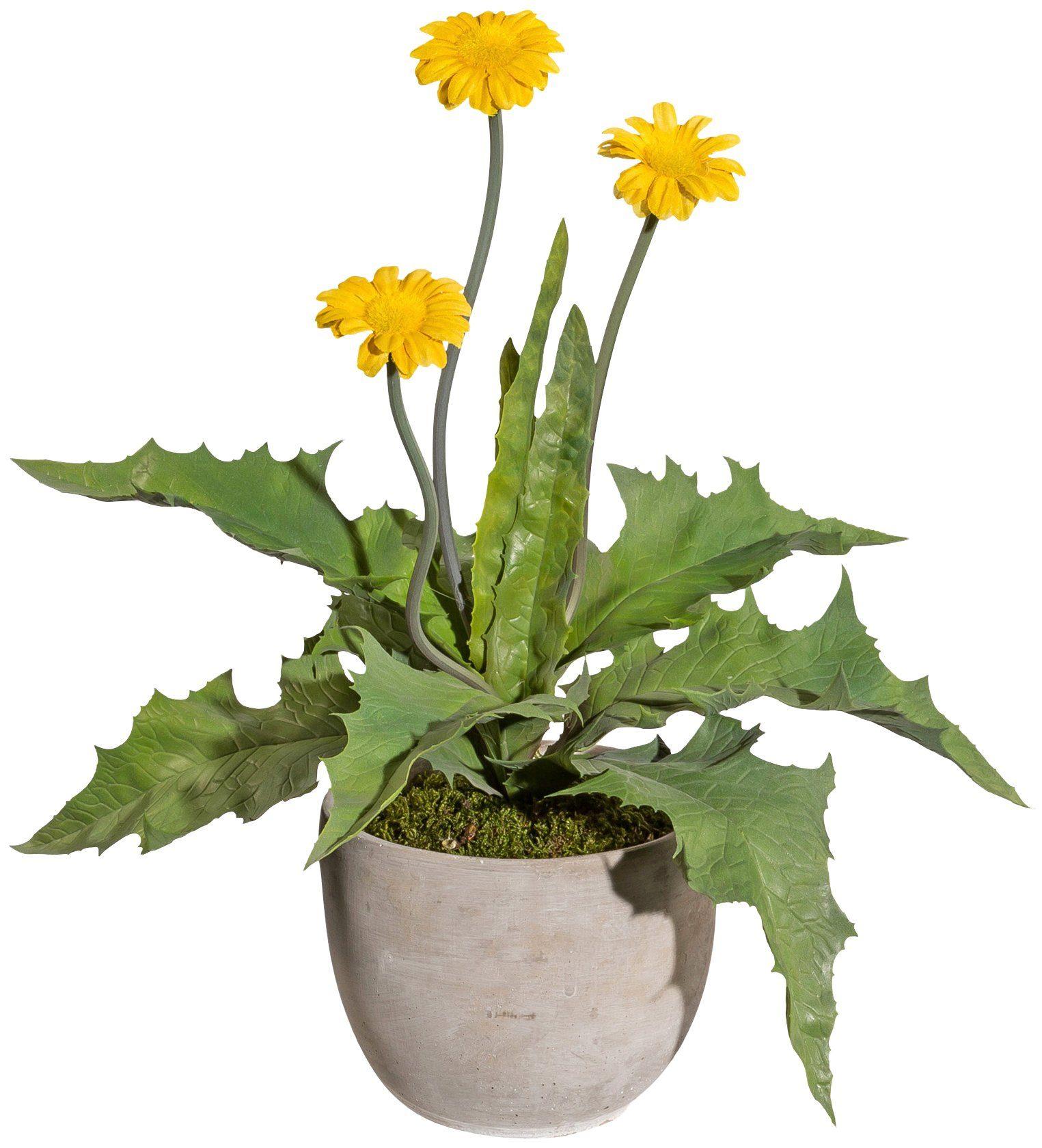 Kunstpflanze »Margerite«, im Zementtopf, Höhe 35 cm, gelb