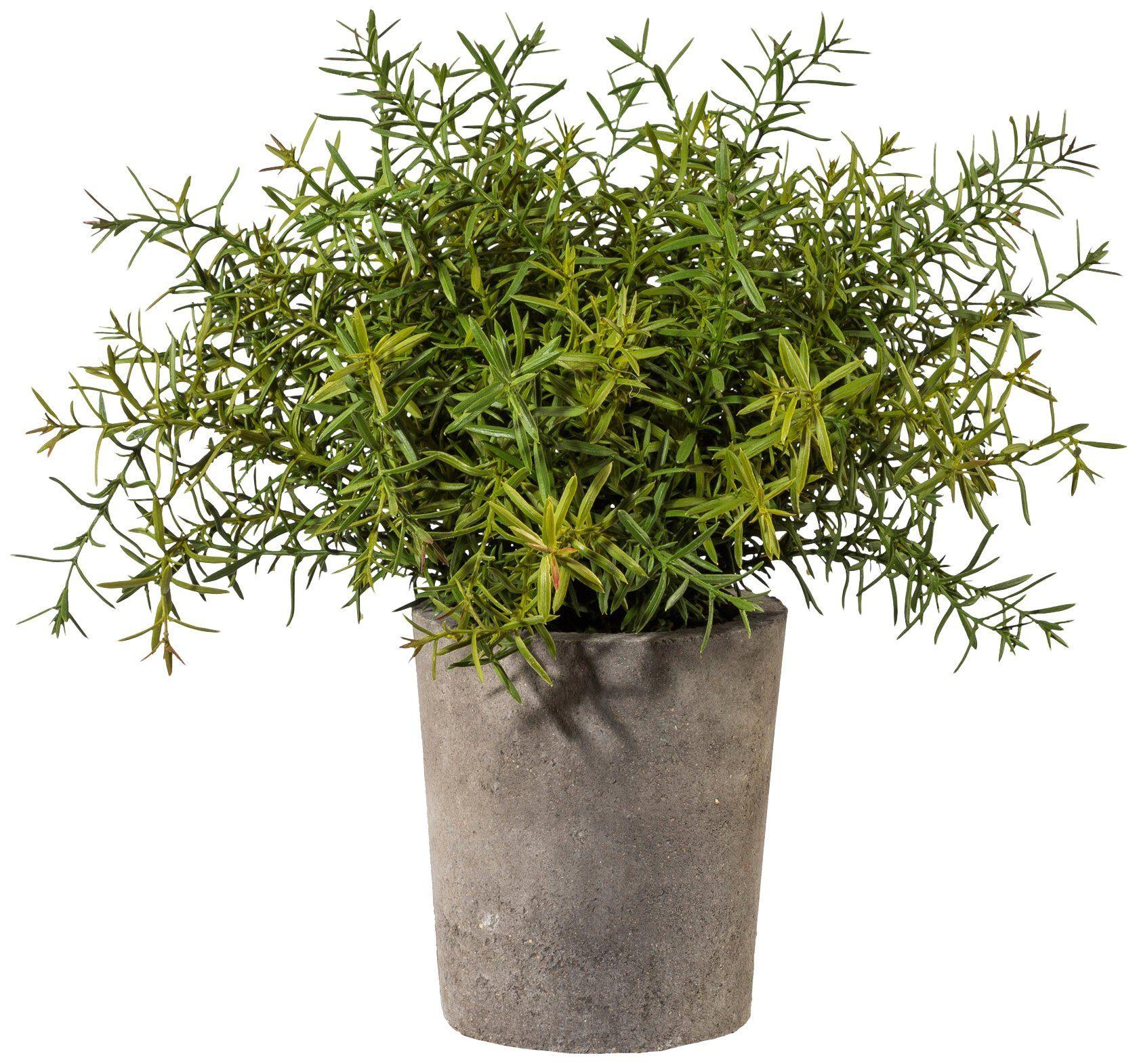 Kunstpflanze »Rosmarin«, im Zementtopf, Höhe 35 cm