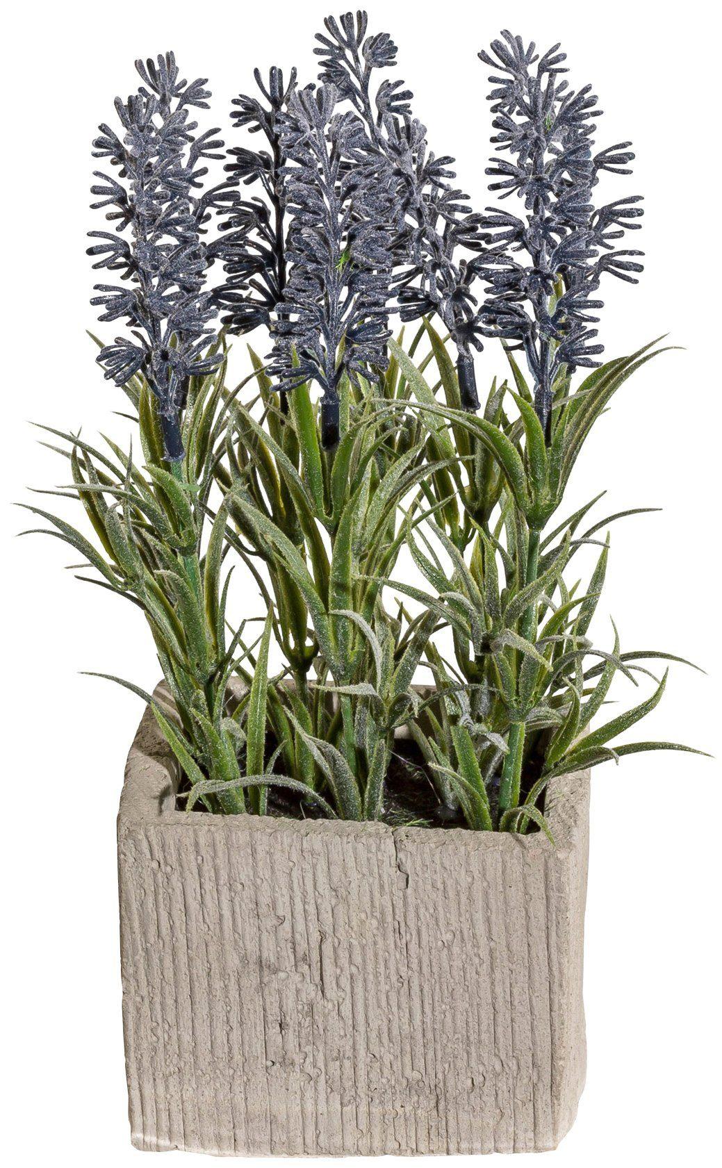 Kunstpflanze »Lavendelbusch«, im Zementtopf, Höhe 20 cm, lila