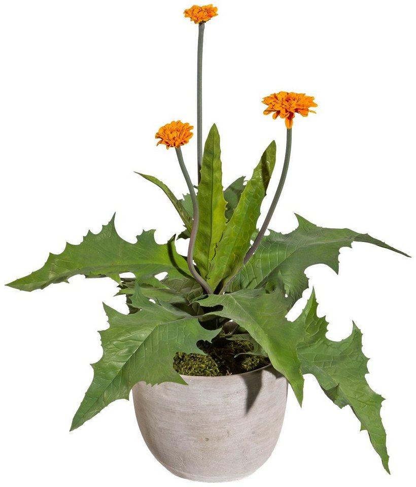 Best pflanzgefase aus moos pictures globexusaus for Otto küchenplaner