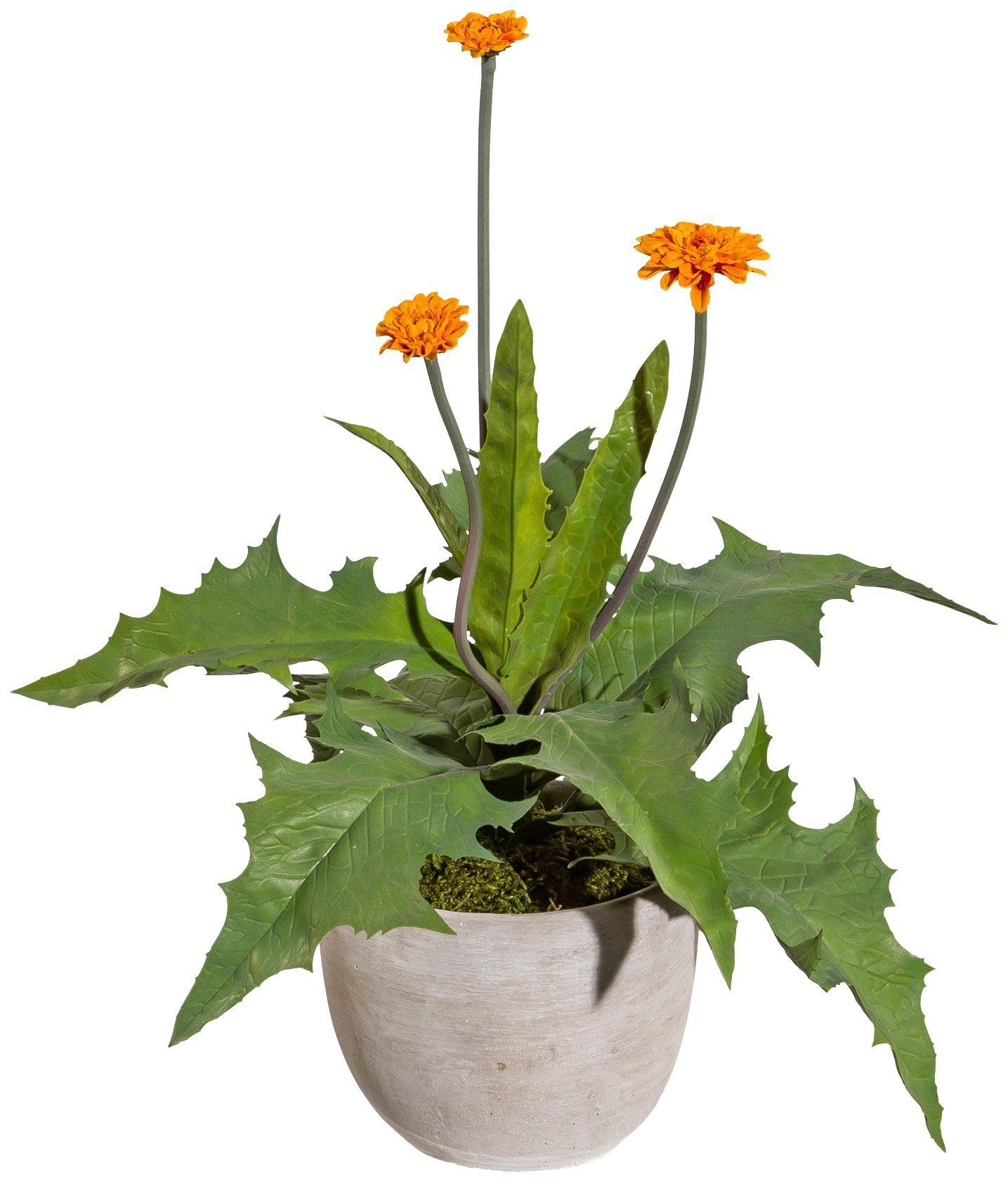 Kunstpflanze »Dahlienpflanze«, im Zementtopf mit Moos, Höhe 35 cm, orange