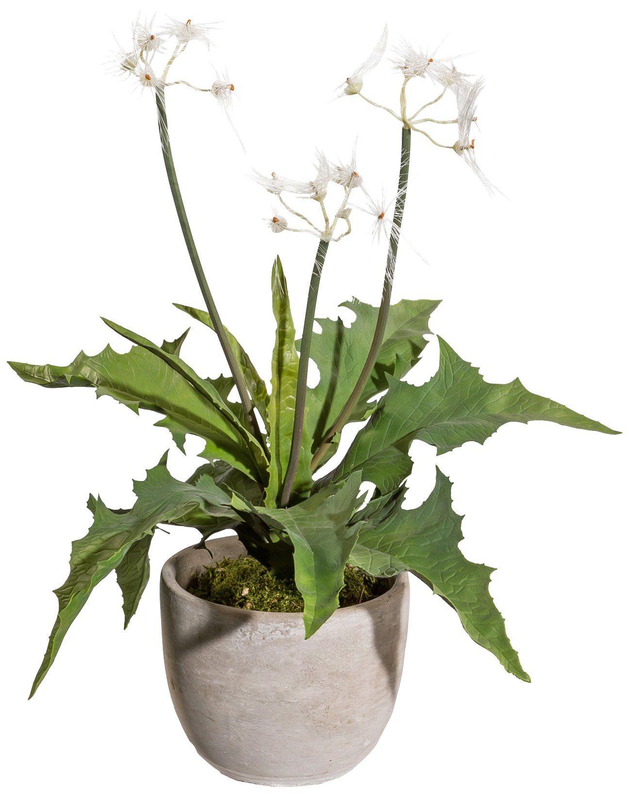 Kunstpflanze »Pusteblumenbusch«, im Zementtopf, Höhe 40 cm, weiß