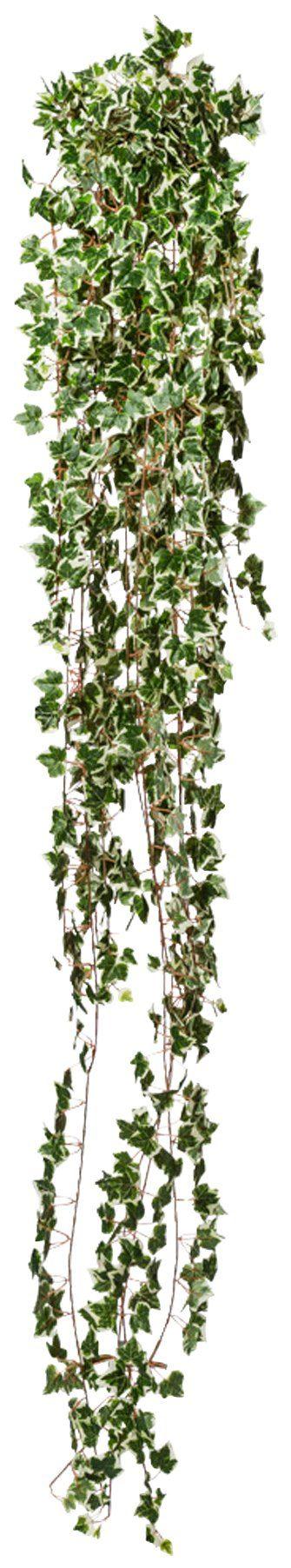 Kunstpflanze »Holländische Efeuranke«, Höhe 180 cm