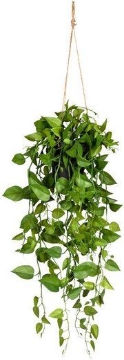 Kunstranke »Philodendronhänger« Philodendron, Creativ green, Höhe 75 cm, im Hängetopf