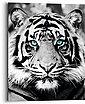 Reinders! Holzbild »Blue Eyed Tiger«, (1 Stück), Bild 1