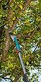 GARDENA Gartensäge »combisystem 300 PP«, 325 mm, mit Teleskopstiel, Bild 4