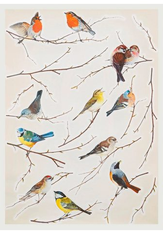 Komar Wandtattoo »Vögel«