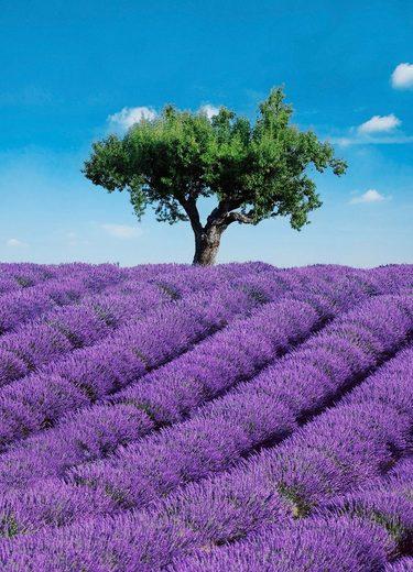 Fototapete »Provence«, 4-teilig, 183x254 cm