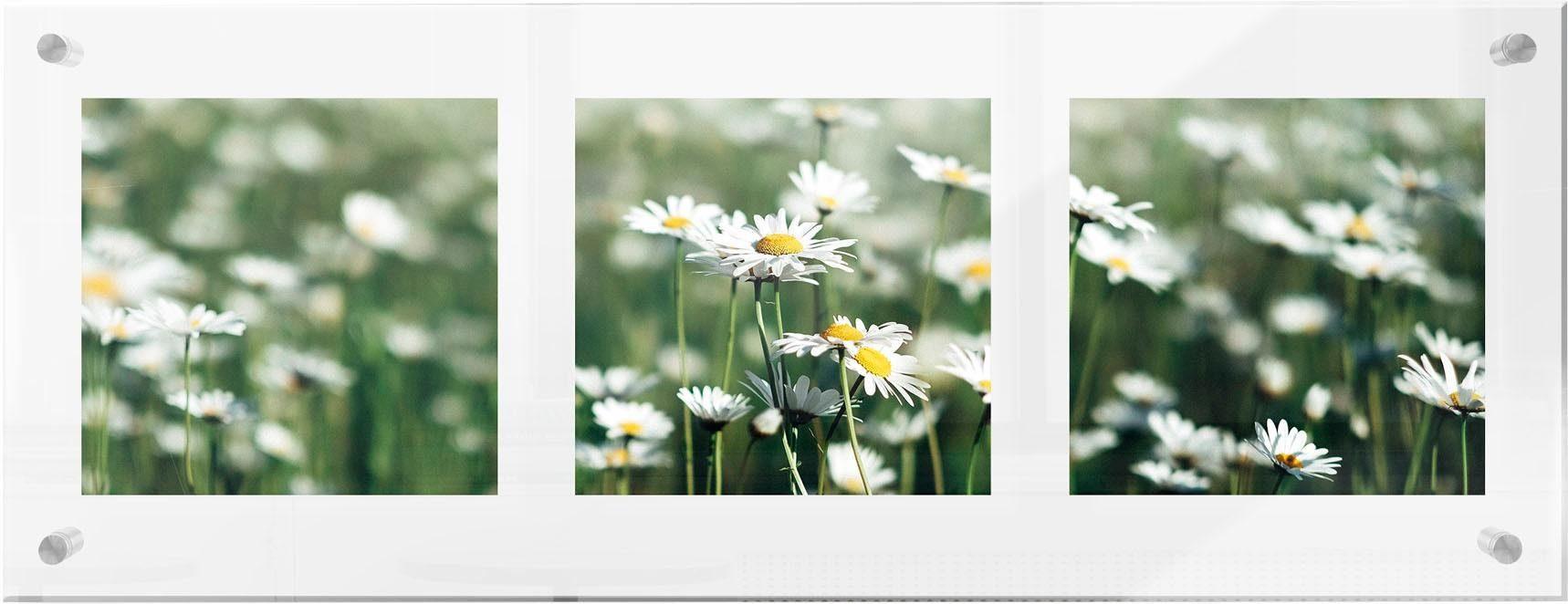 Premium collection by Home affaire Acrylglasbild »Daisy«, 78/28 cm