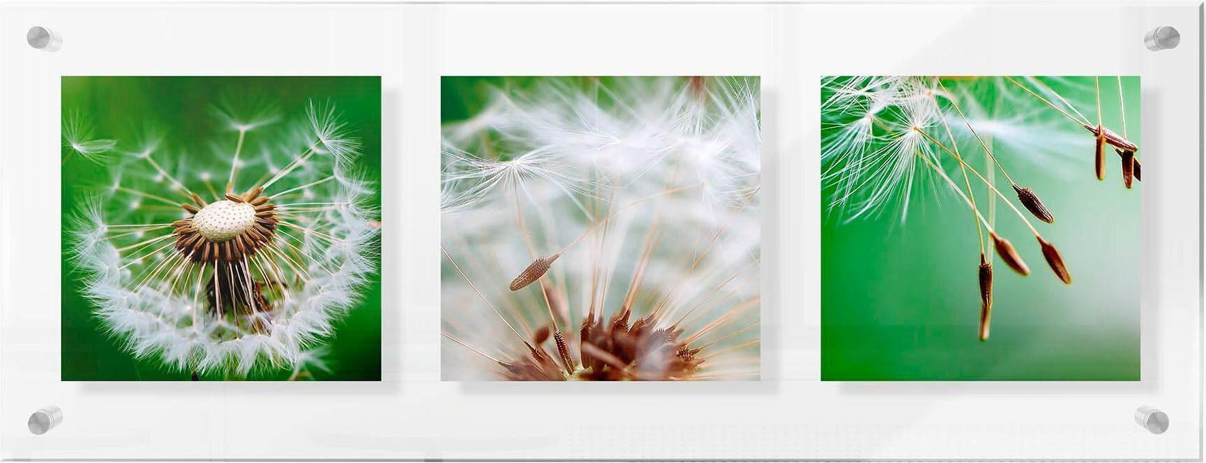 Premium collection by Home affaire Acrylglasbild »Fliegerschirmchen auf Reise«, 78/28 cm