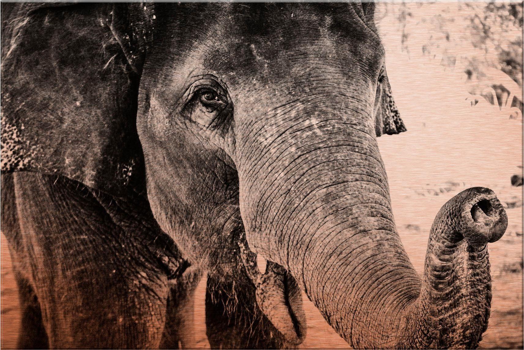 Alu-Dibond-Kupfereffekt »Indian Elephant«, 60/40 cm