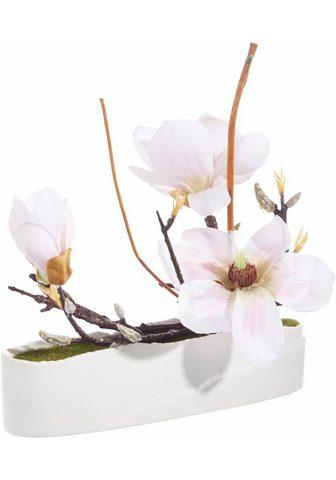 HOME AFFAIRE Dirbtinis augalas »Magnolie in Schale«...