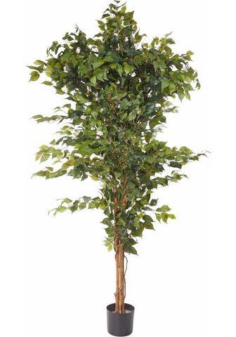Dirbtinis augalas »Ficus Benjamini«