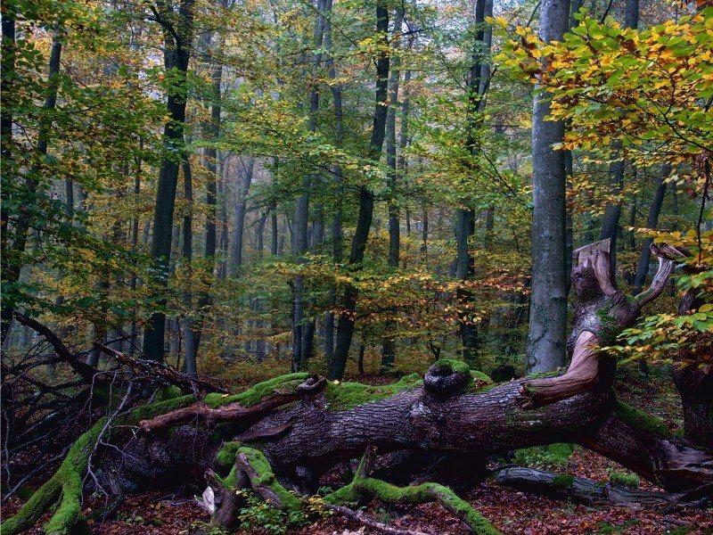 Artland Poster, Leinwandbild »Landschaften Wald Bäume Natur Blätter Foto« | Dekoration > Bilder und Rahmen > Poster | Kiefernholz | Artland
